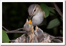brid feeding